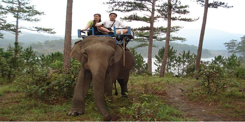 Elephant riding tour